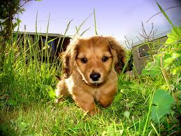 Here is a cute puppy in a garden in spring. It has nothing really to do with this post. Image: tailsofhawaii.com